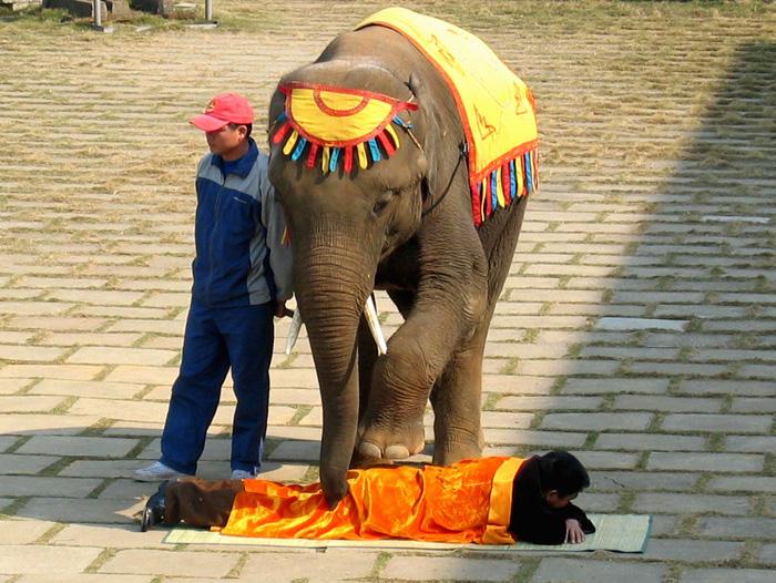 象さんマッサージ、はじめました